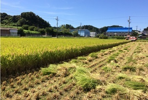 Clariant's Licocare® RBW Renewably Based Rice Grain Feedstock