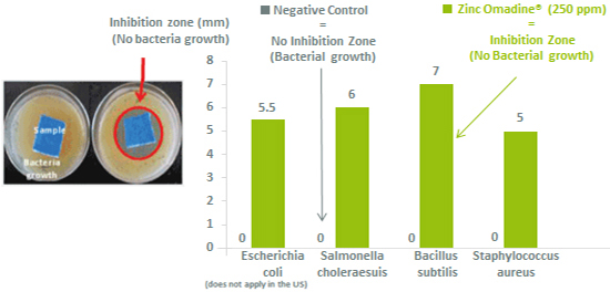 Elastomer protection against bacteria with Zinc OMADINE Antimicrobial
