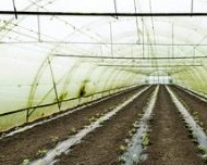 UV stabilizers in Agriculture